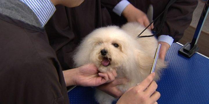 寵物美容師成寵物行業裡的熱點