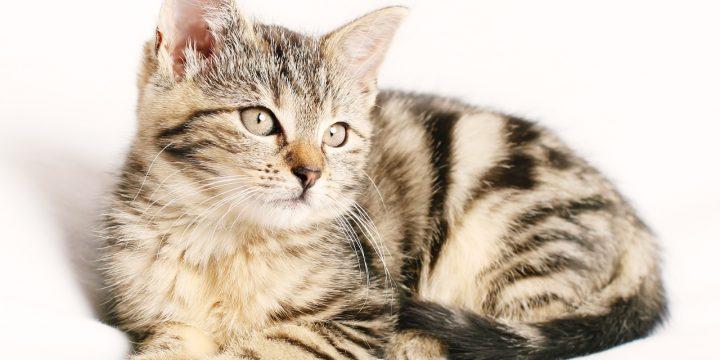 寵物美容師執照好拿嗎?寵物美容課程費用貴不貴呢?